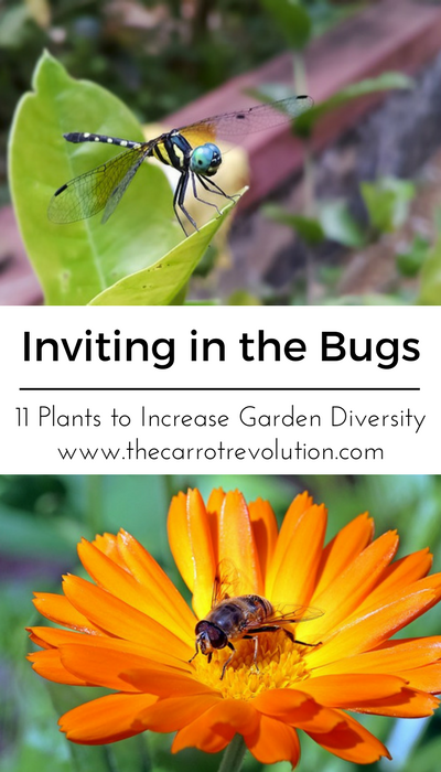 Inviting in the Bugs: 11 Plants to Increase Garden Diversity