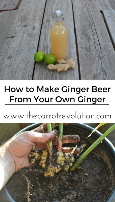 how make ginger beer